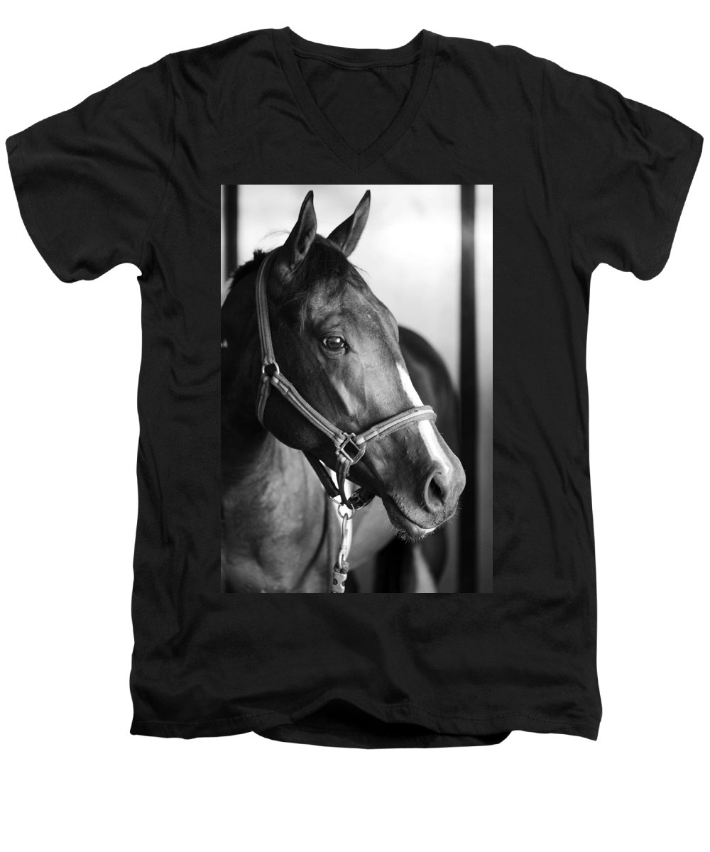 Horse Men's V-Neck T-Shirt featuring the photograph Horse And Stillness by Marilyn Hunt