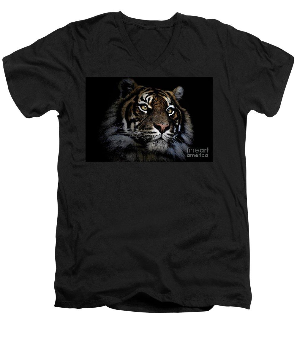 Sumatran Tiger Wildlife Endangered Men's V-Neck T-Shirt featuring the photograph Sumatran Tiger by Avalon Fine Art Photography