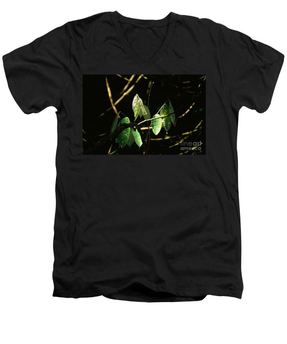 Leaves Men's V-Neck T-Shirt featuring the photograph Sunlit Leaves by Kathy McClure