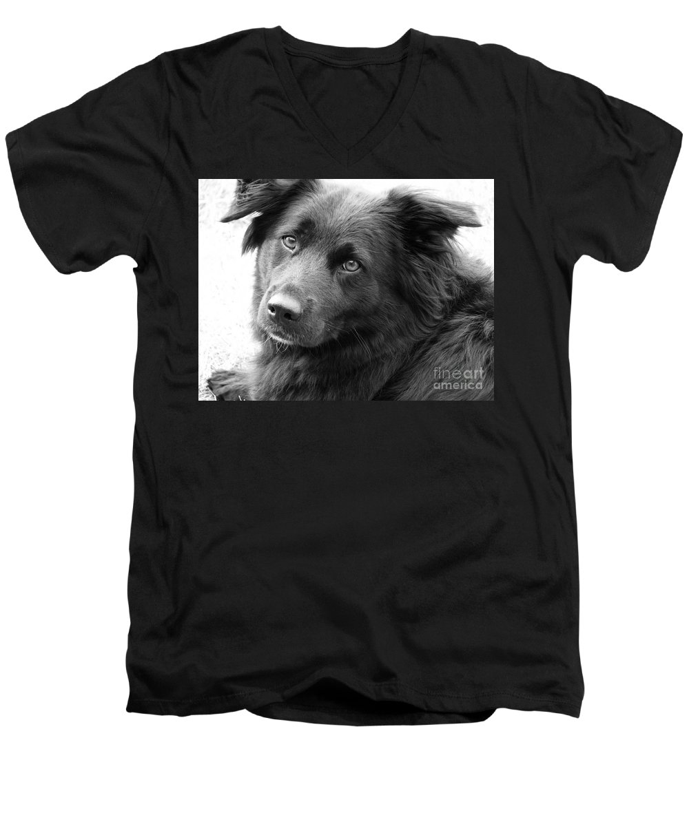 Dog Men's V-Neck T-Shirt featuring the photograph Thinking by Amanda Barcon