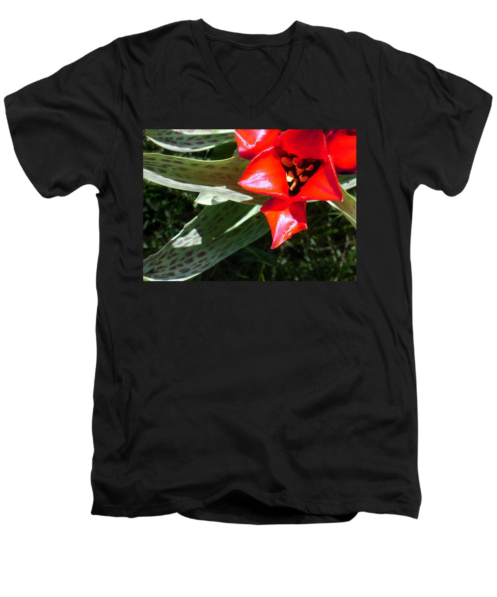 Tulip Men's V-Neck T-Shirt featuring the photograph Tulip by Steve Karol