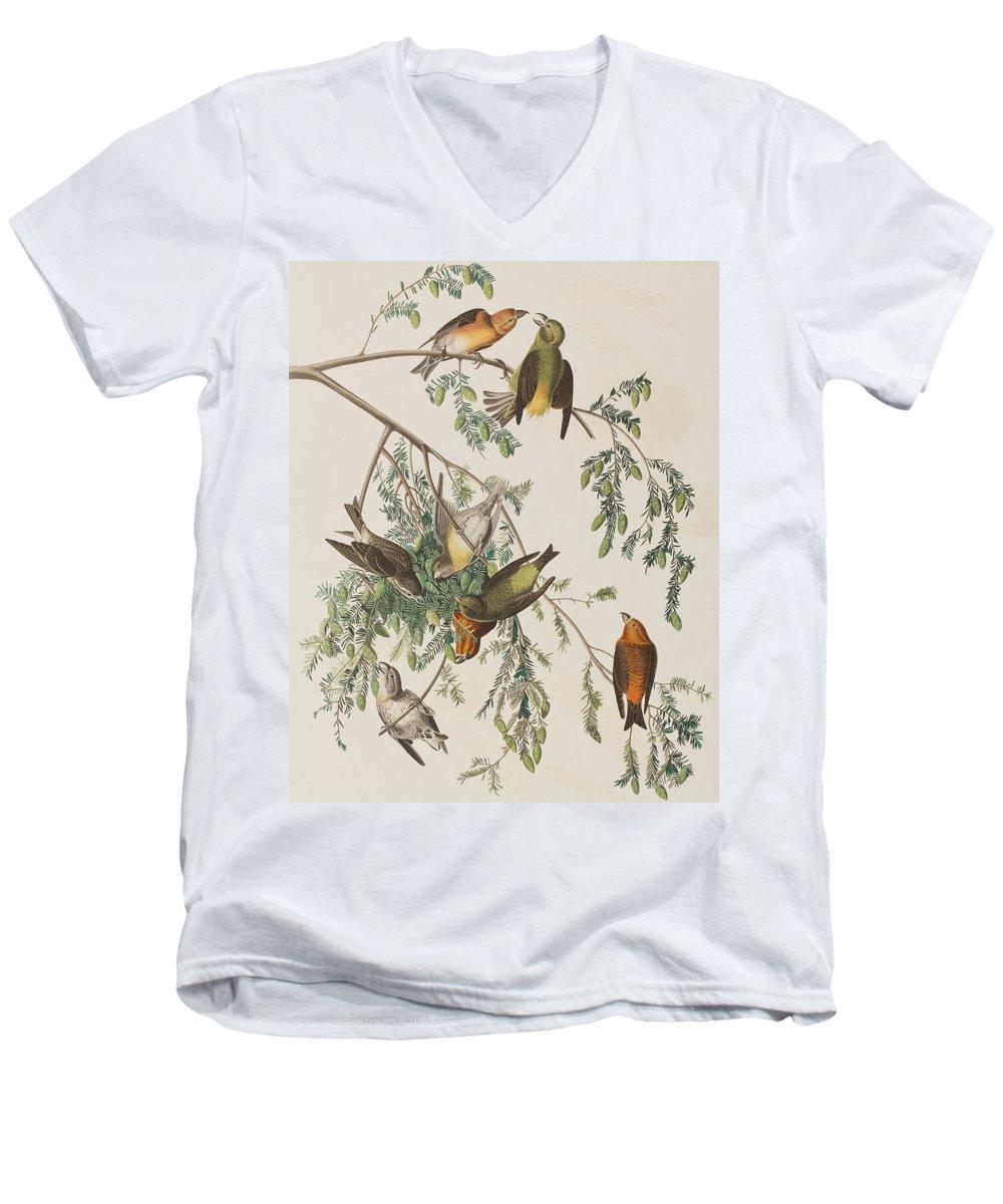 Crossbill V-Neck T-Shirts