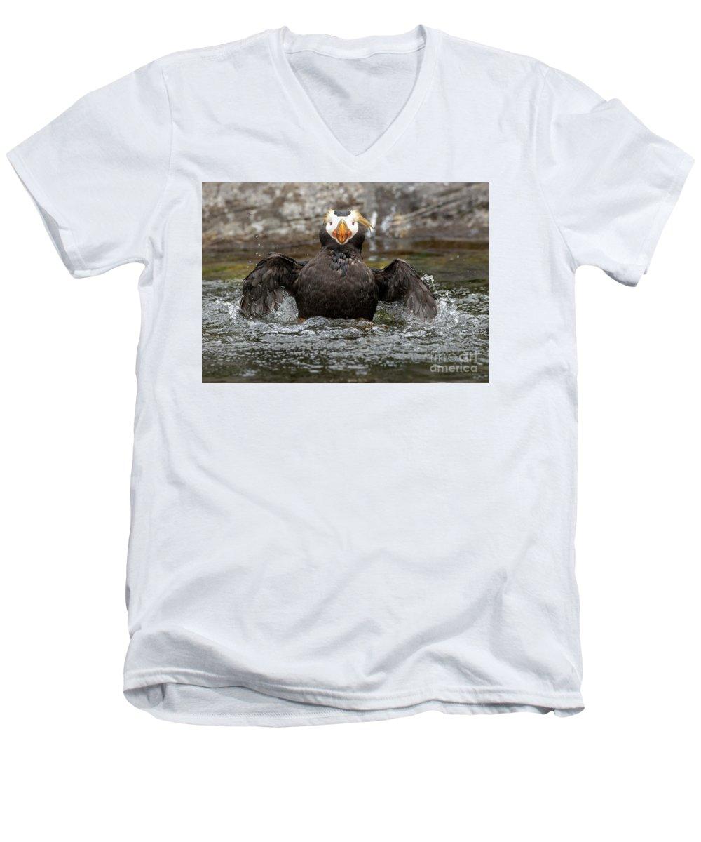 Auklets V-Neck T-Shirts