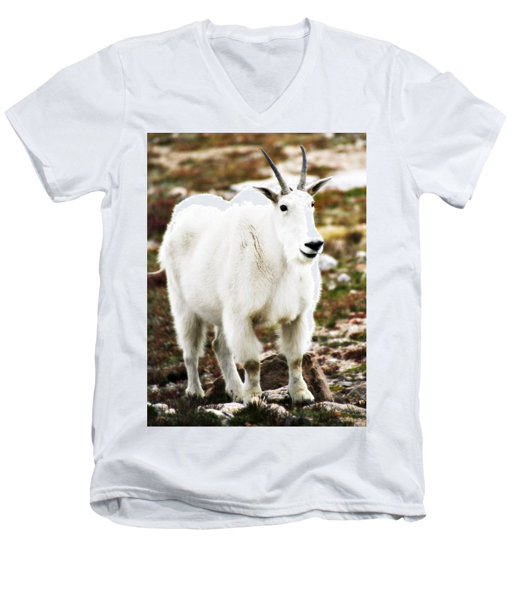 Animal Men's V-Neck T-Shirt featuring the photograph Mountain Goat by Marilyn Hunt