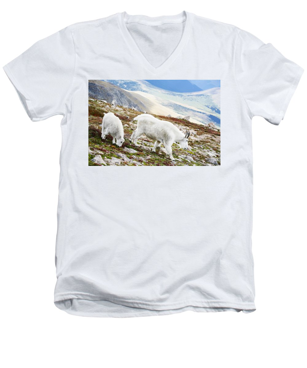 Mountain Men's V-Neck T-Shirt featuring the photograph Mountain Goats 1 by Marilyn Hunt