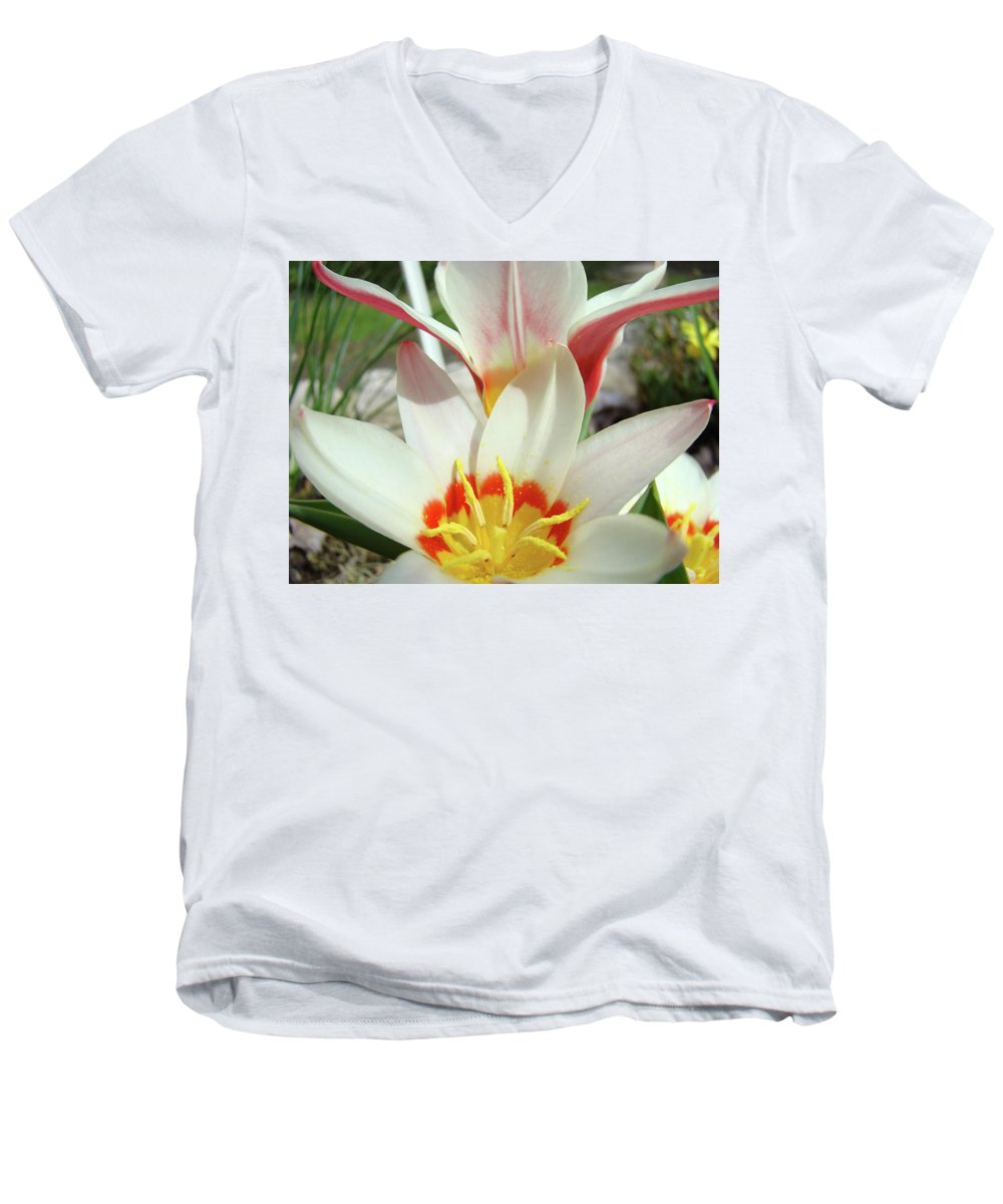 �tulips Artwork� Men's V-Neck T-Shirt featuring the photograph Tulips Flowers Artwork 1 Tulip Flower Art Prints Spring Floral Art White Tulips Garden by Baslee Troutman