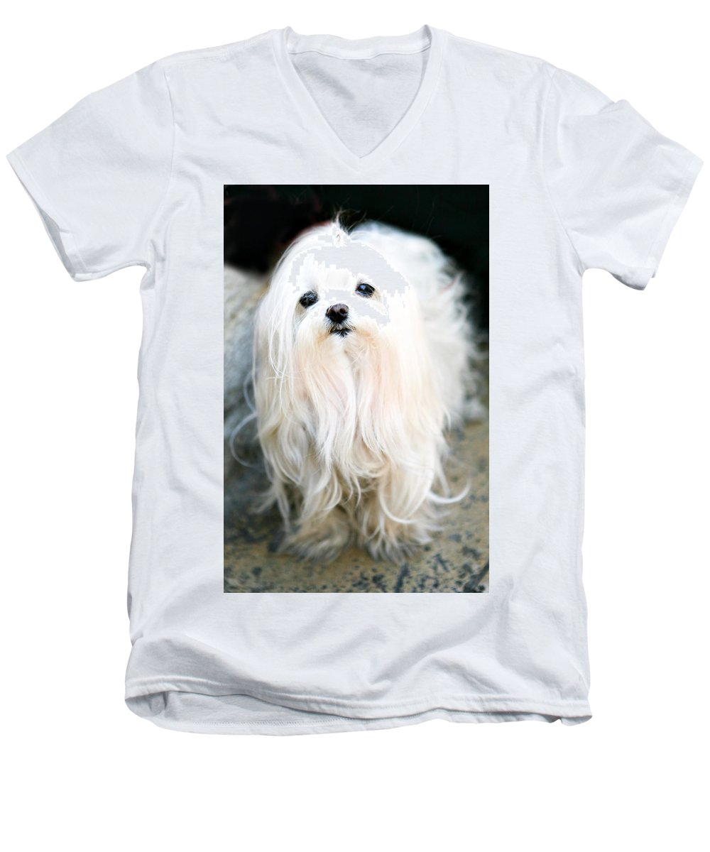 Small Men's V-Neck T-Shirt featuring the photograph White Fluff by Marilyn Hunt