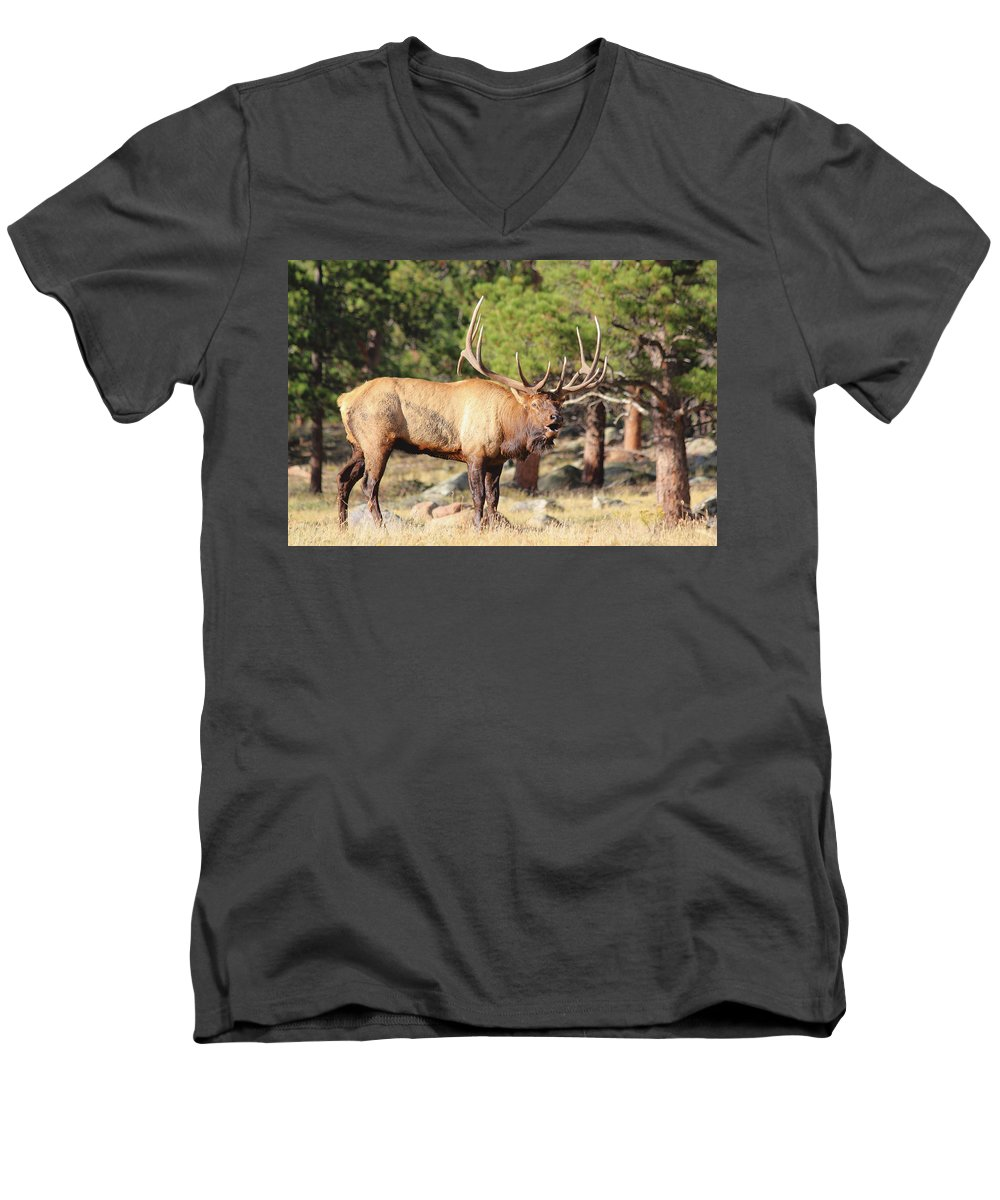 Elk Men's V-Neck T-Shirt featuring the photograph Evening Roundup by Shane Bechler