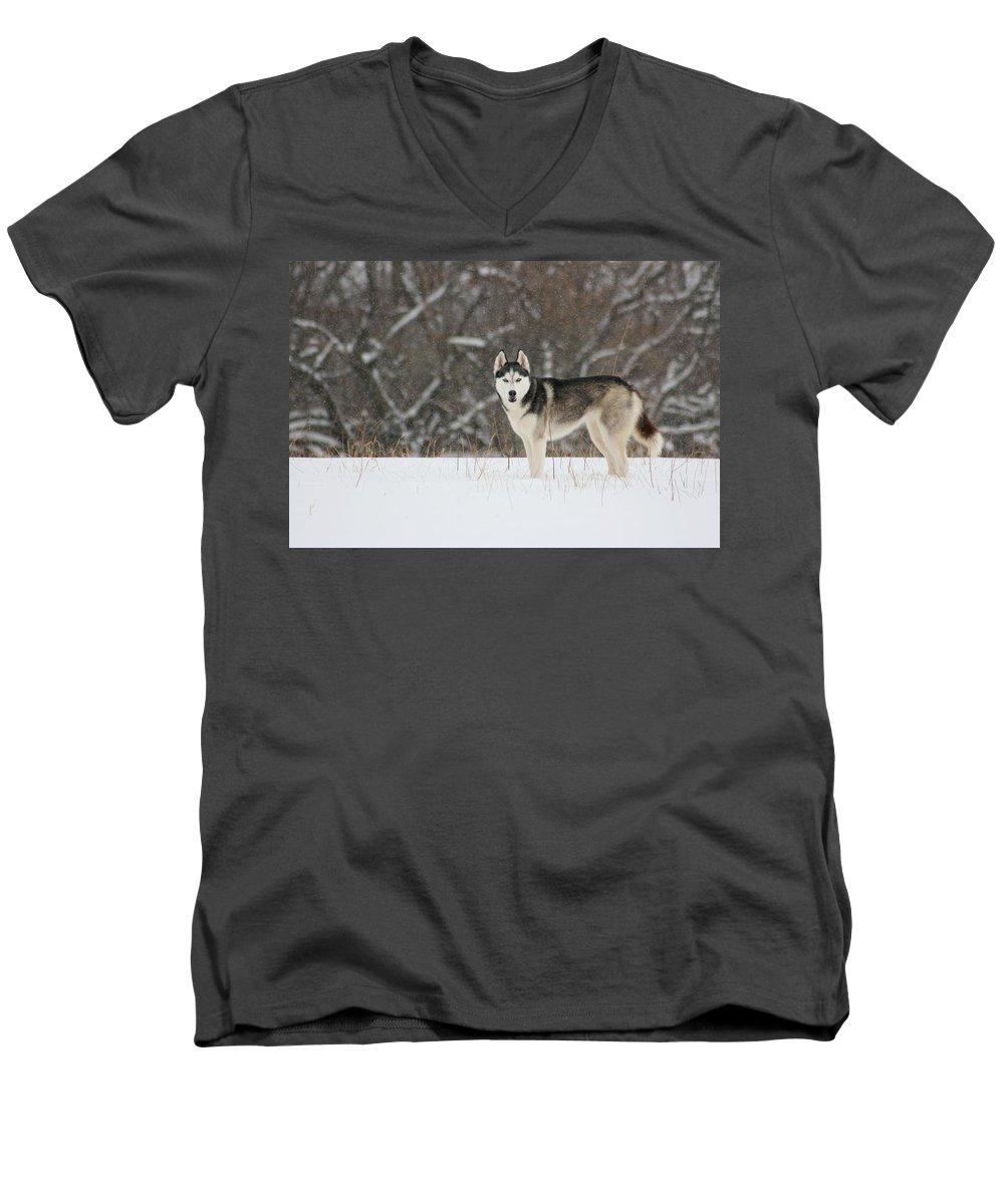 Landscape Men's V-Neck T-Shirt featuring the photograph Siberian Husky 20 by David Dunham