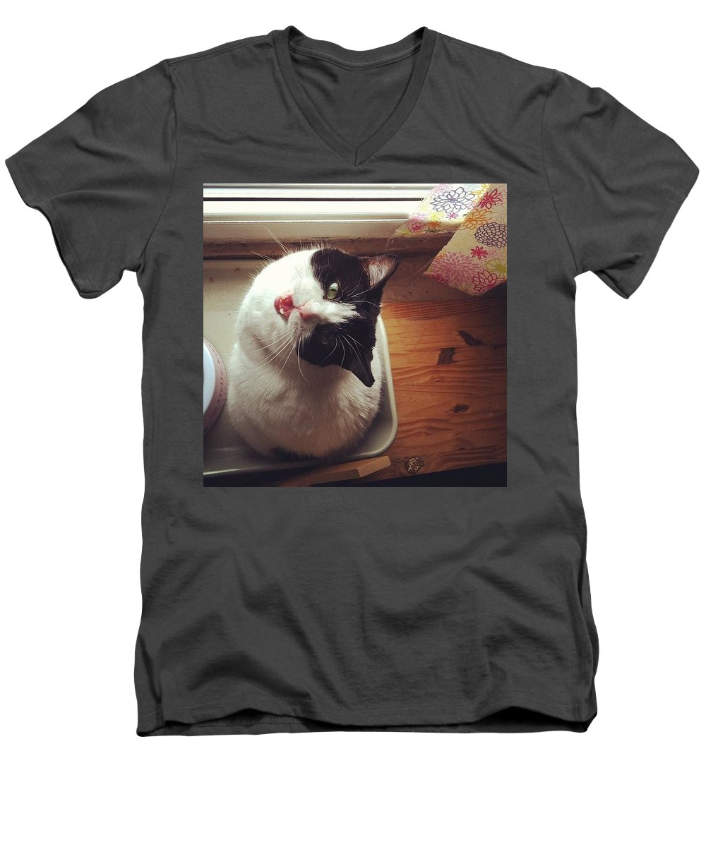 Catsofinstagram Men's V-Neck T-Shirt featuring the photograph the Bowl's Empty! #cat by Katie Cupcakes