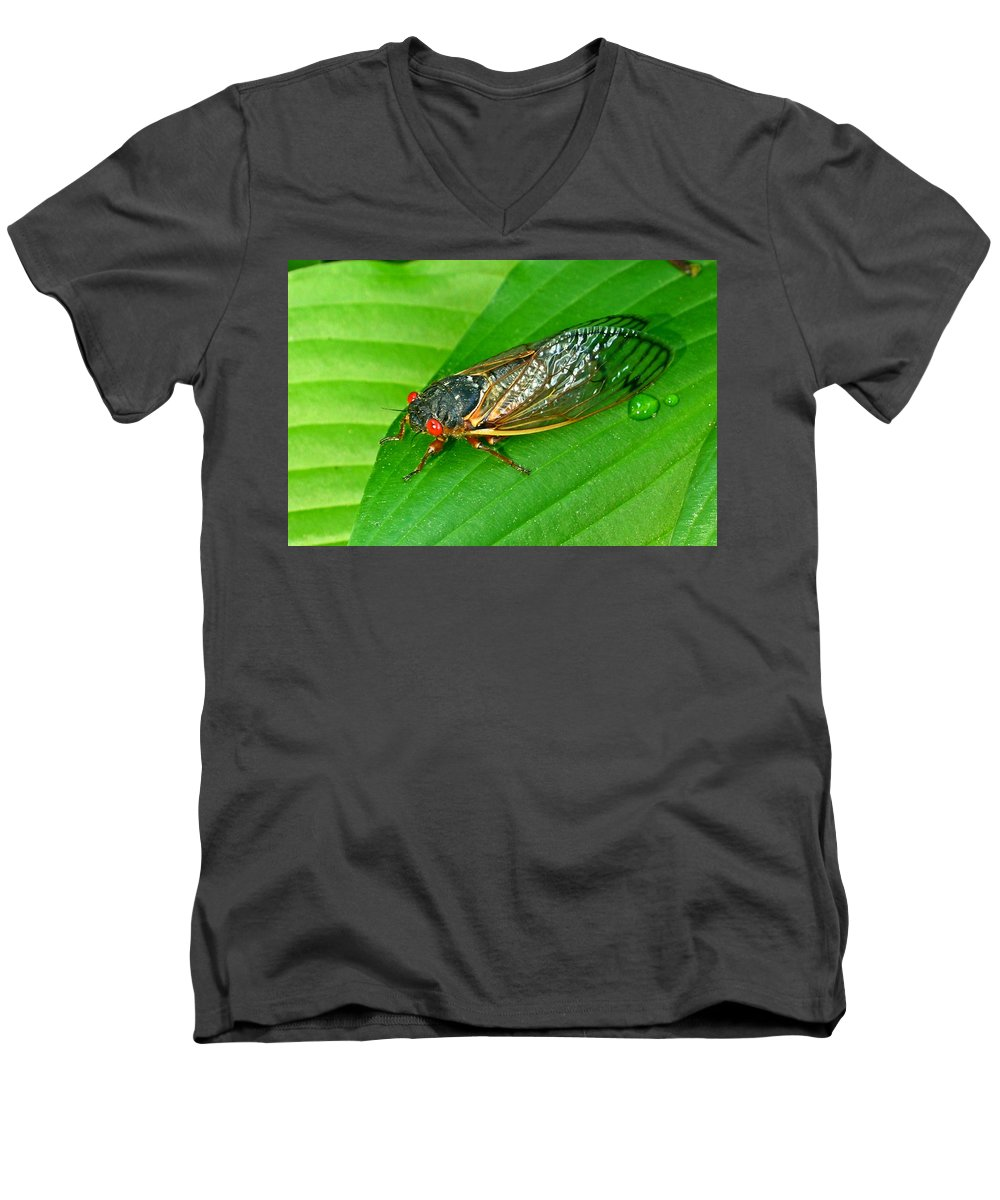 17 Men's V-Neck T-Shirt featuring the photograph 17 Year Periodical Cicada by Douglas Barnett