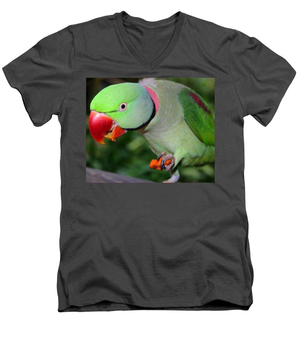 Alexandrine Parrot Men's V-Neck T-Shirt featuring the photograph Alexandrine Parrot Feeding by Ralph A Ledergerber-Photography