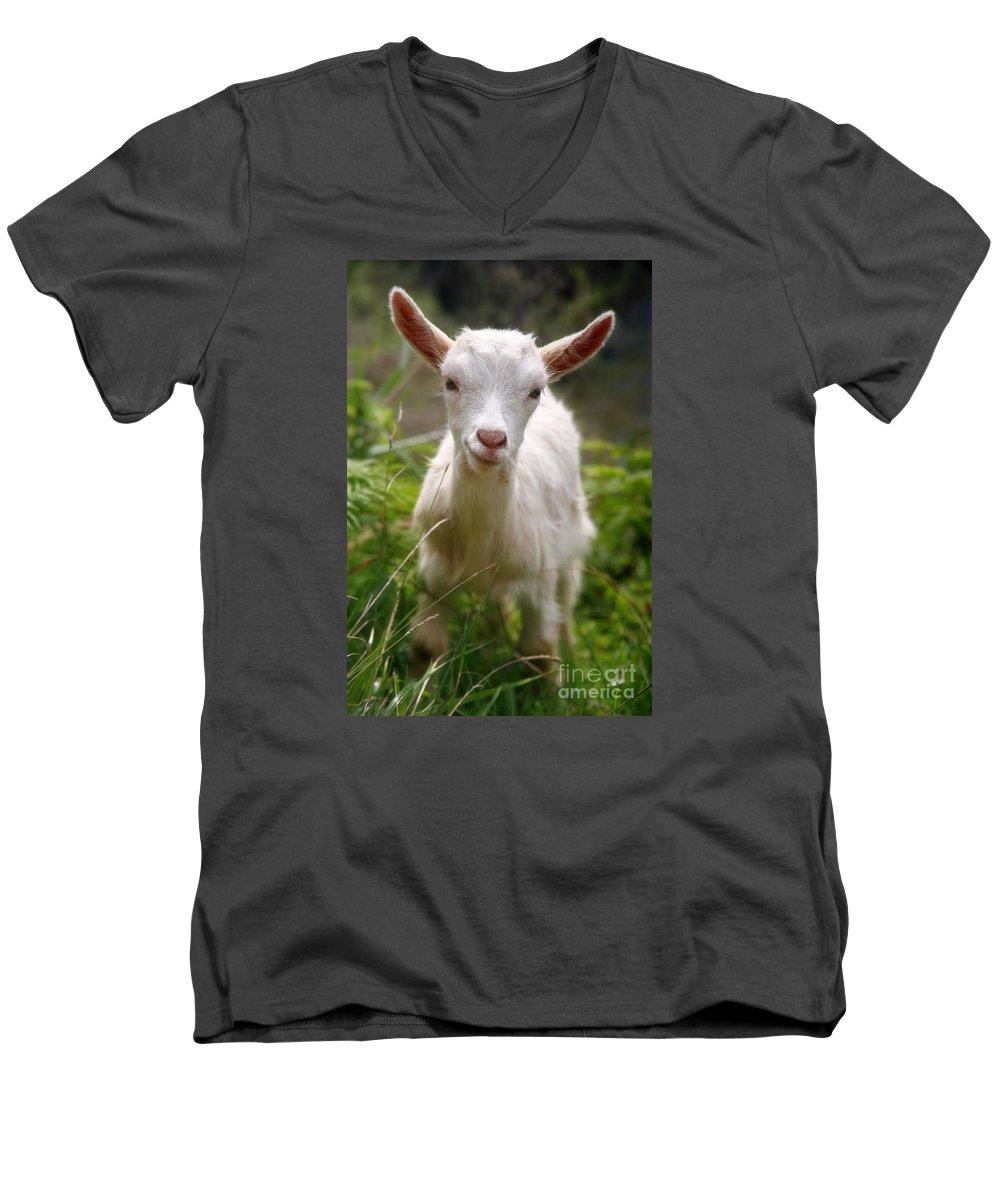 Animals Men's V-Neck T-Shirt featuring the photograph Baby Goat by Gaspar Avila