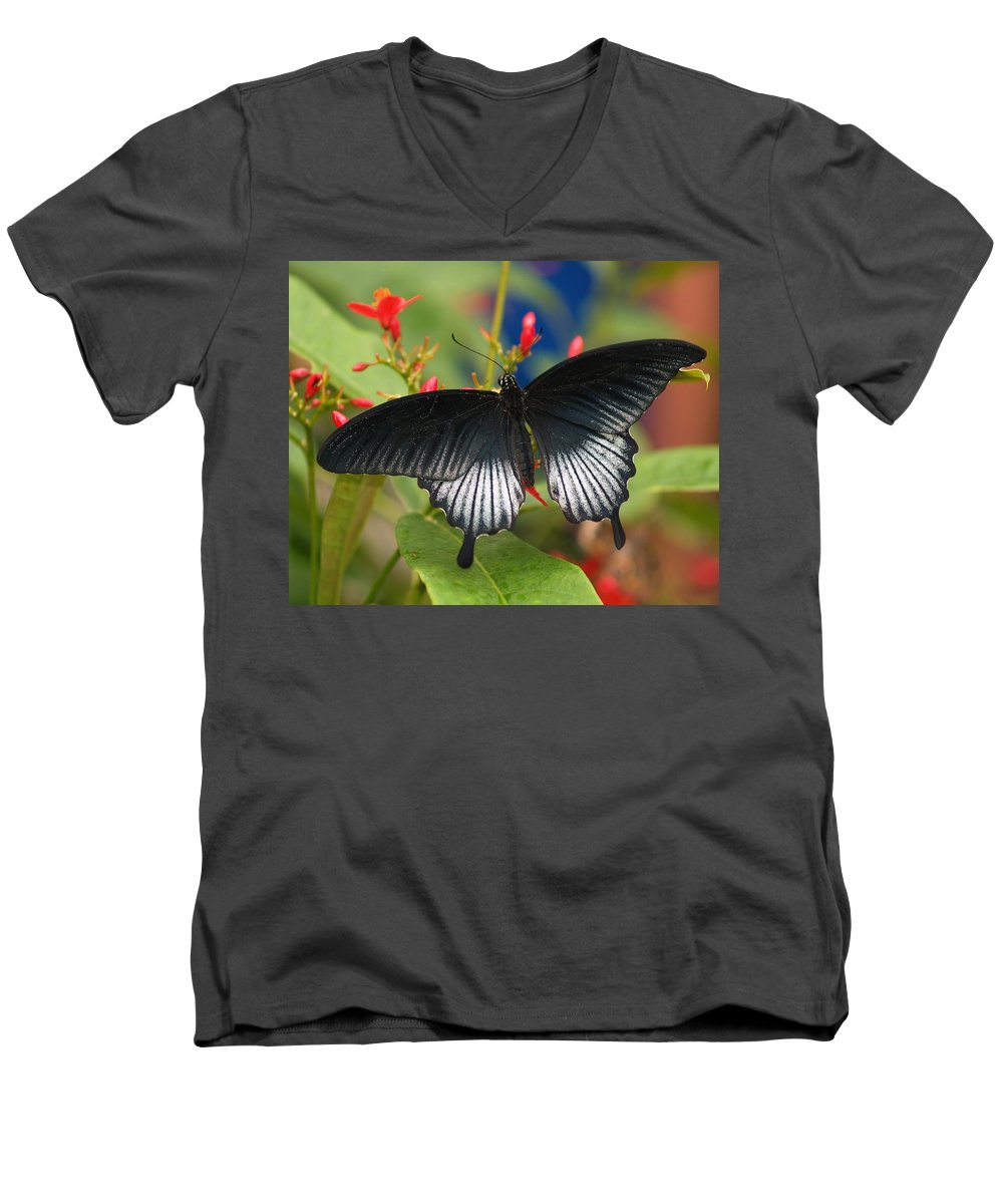 Butterfly Men's V-Neck T-Shirt featuring the photograph Black Beauty by Gaby Swanson