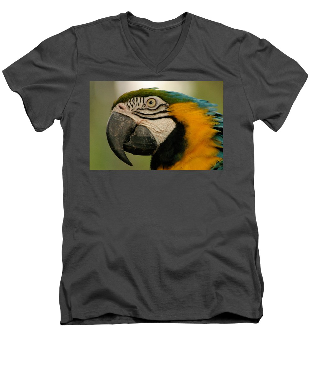 Parrot Men's V-Neck T-Shirt featuring the photograph Blue Gold Macaw South America by Ralph A Ledergerber-Photography