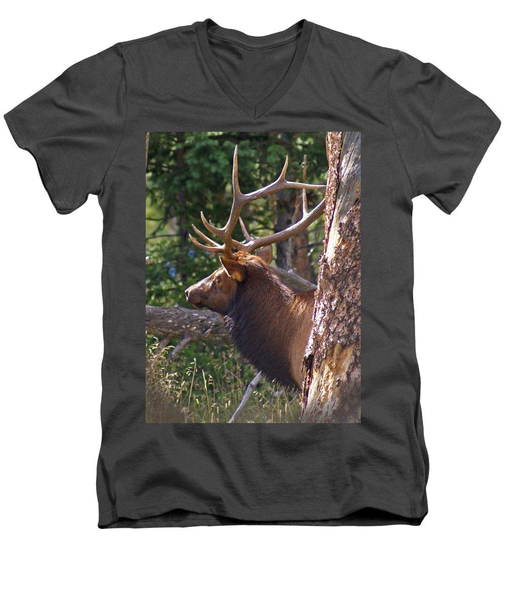 Elk Men's V-Neck T-Shirt featuring the photograph Bull Elk 2 by Heather Coen