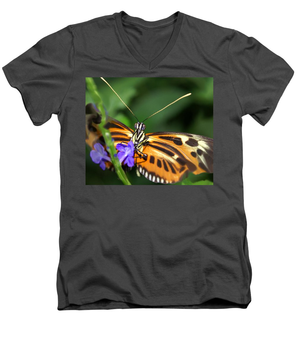 Butterfly Men's V-Neck T-Shirt featuring the photograph Butterfly 2 Eucides Isabella by Heather Coen