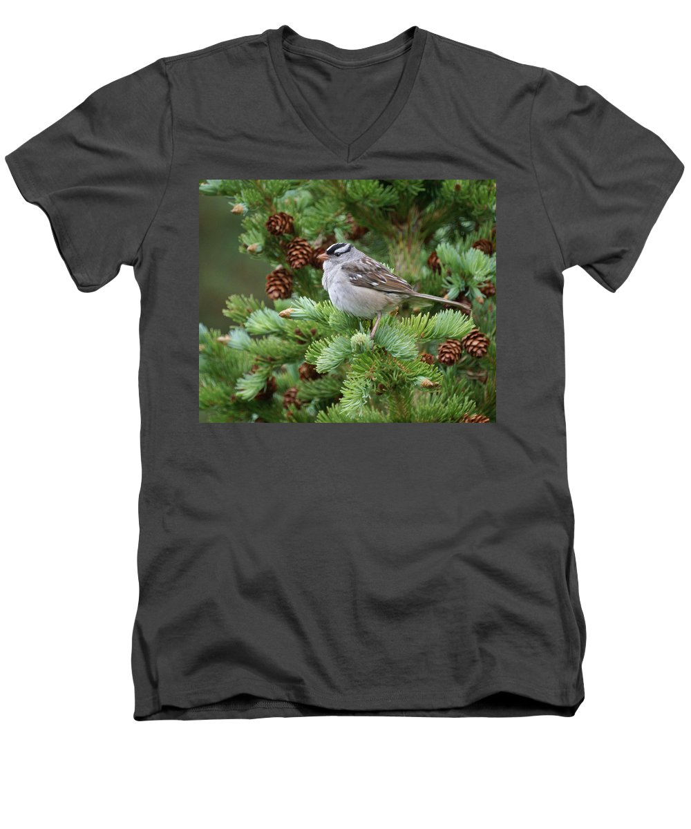 Chickadee Men's V-Neck T-Shirt featuring the photograph Chickadee by Heather Coen