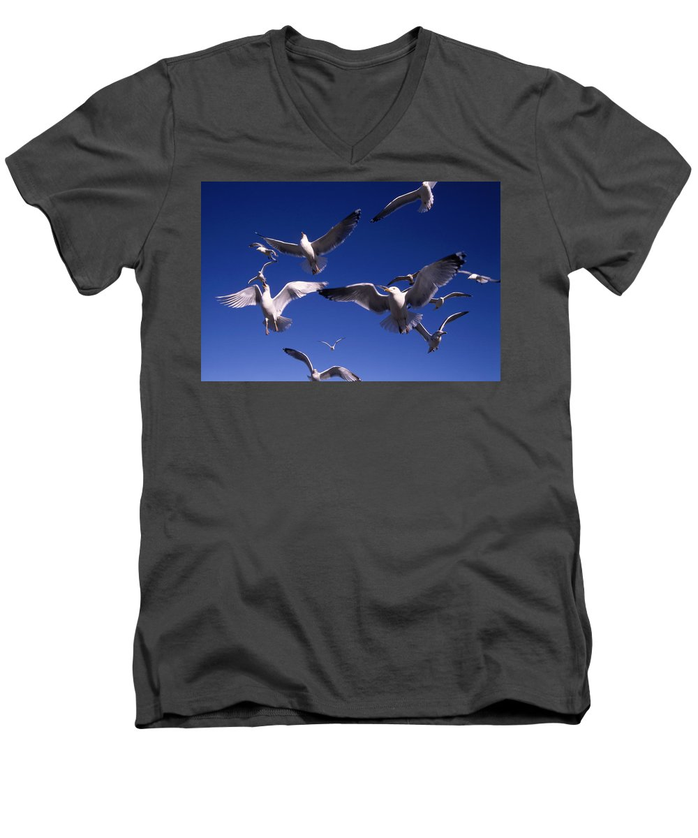 Seagull Birds Flight Men's V-Neck T-Shirt featuring the photograph Cnrg0302 by Henry Butz