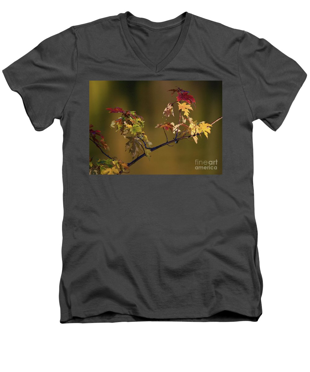 Fall Men's V-Neck T-Shirt featuring the photograph Color On A Stick by Robert Pearson