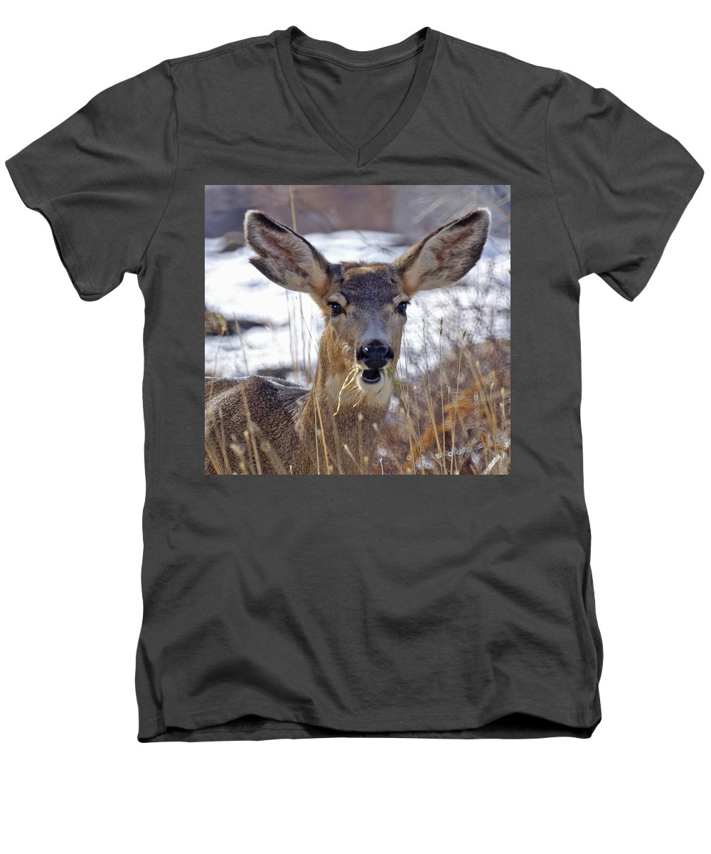 Doe Men's V-Neck T-Shirt featuring the photograph Doe by Heather Coen