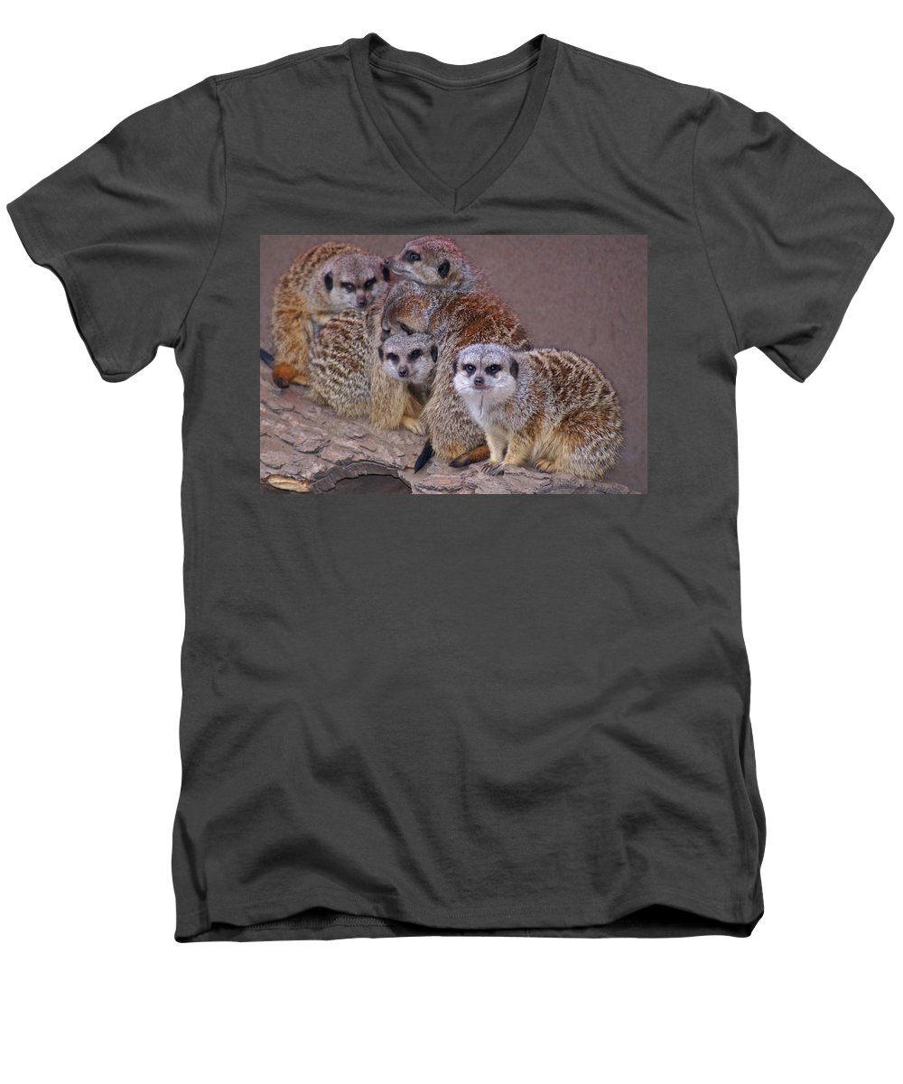 Mer Cats Men's V-Neck T-Shirt featuring the photograph Freezing Meer Cats by Heather Coen
