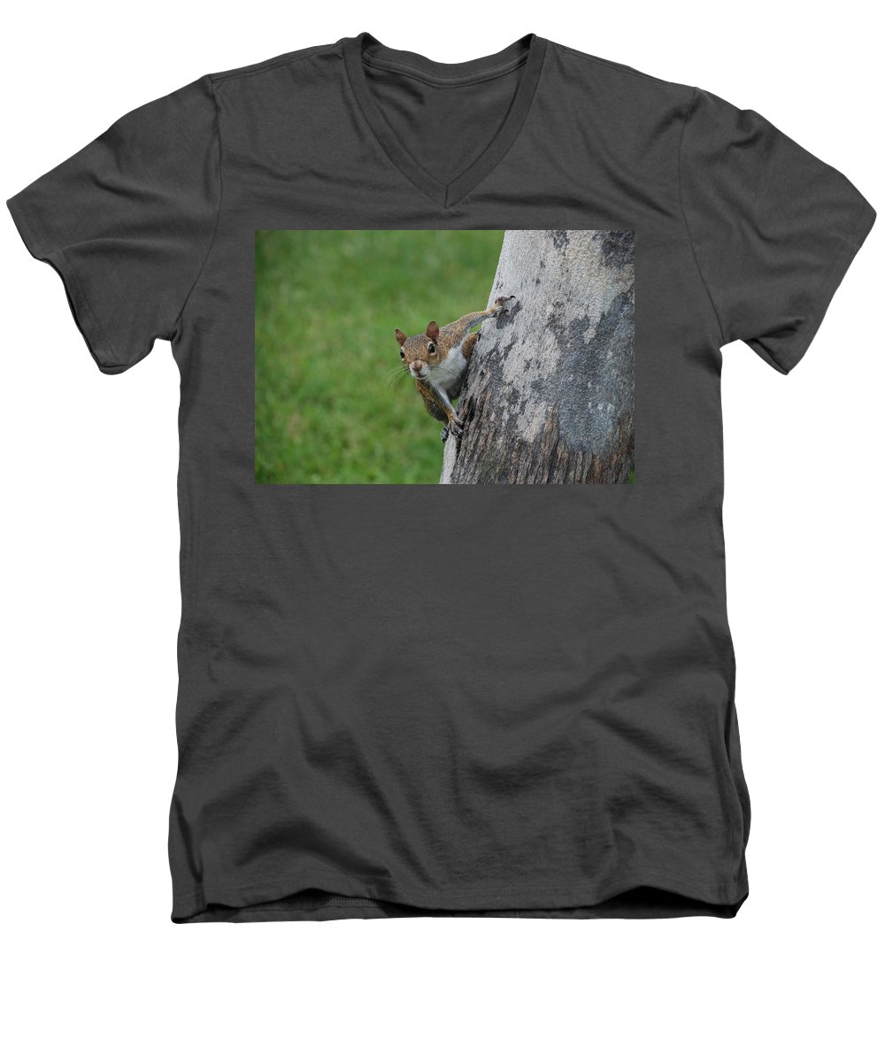 Squirrel Men's V-Neck T-Shirt featuring the photograph Hanging On by Rob Hans