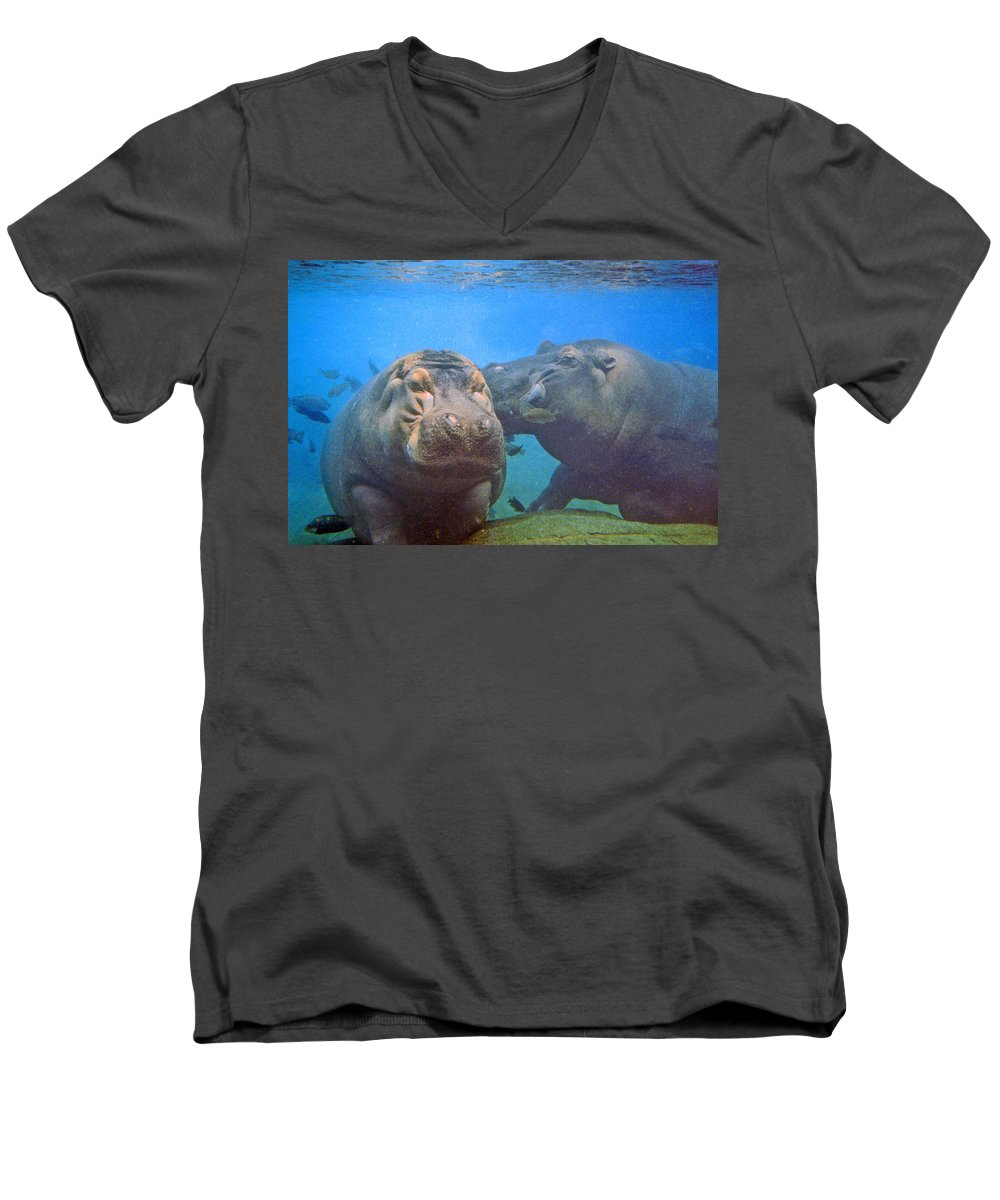 Animals Men's V-Neck T-Shirt featuring the photograph Hippos In Love by Steve Karol