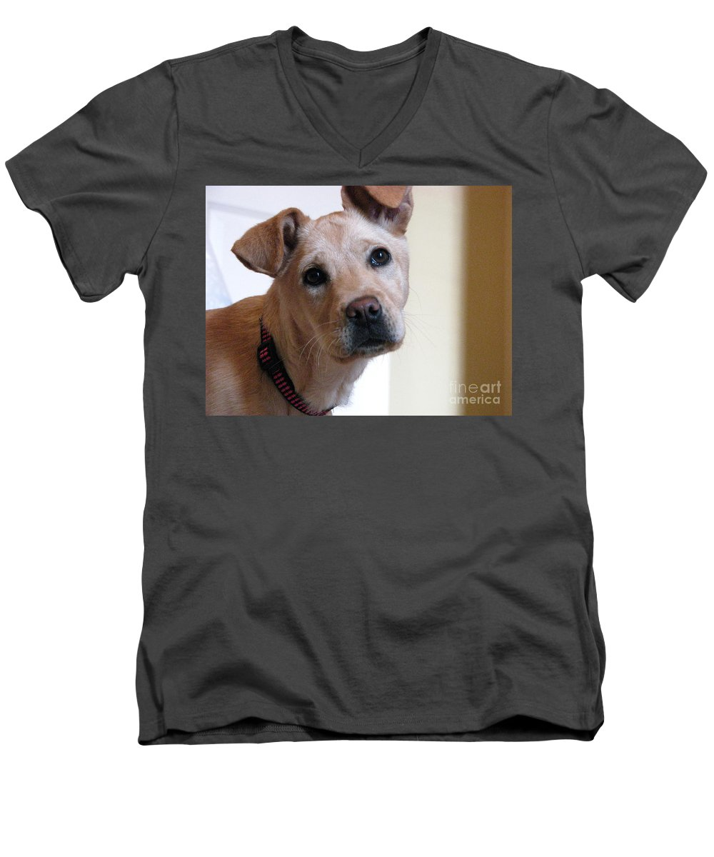 Dog Men's V-Neck T-Shirt featuring the photograph Honey by Amanda Barcon
