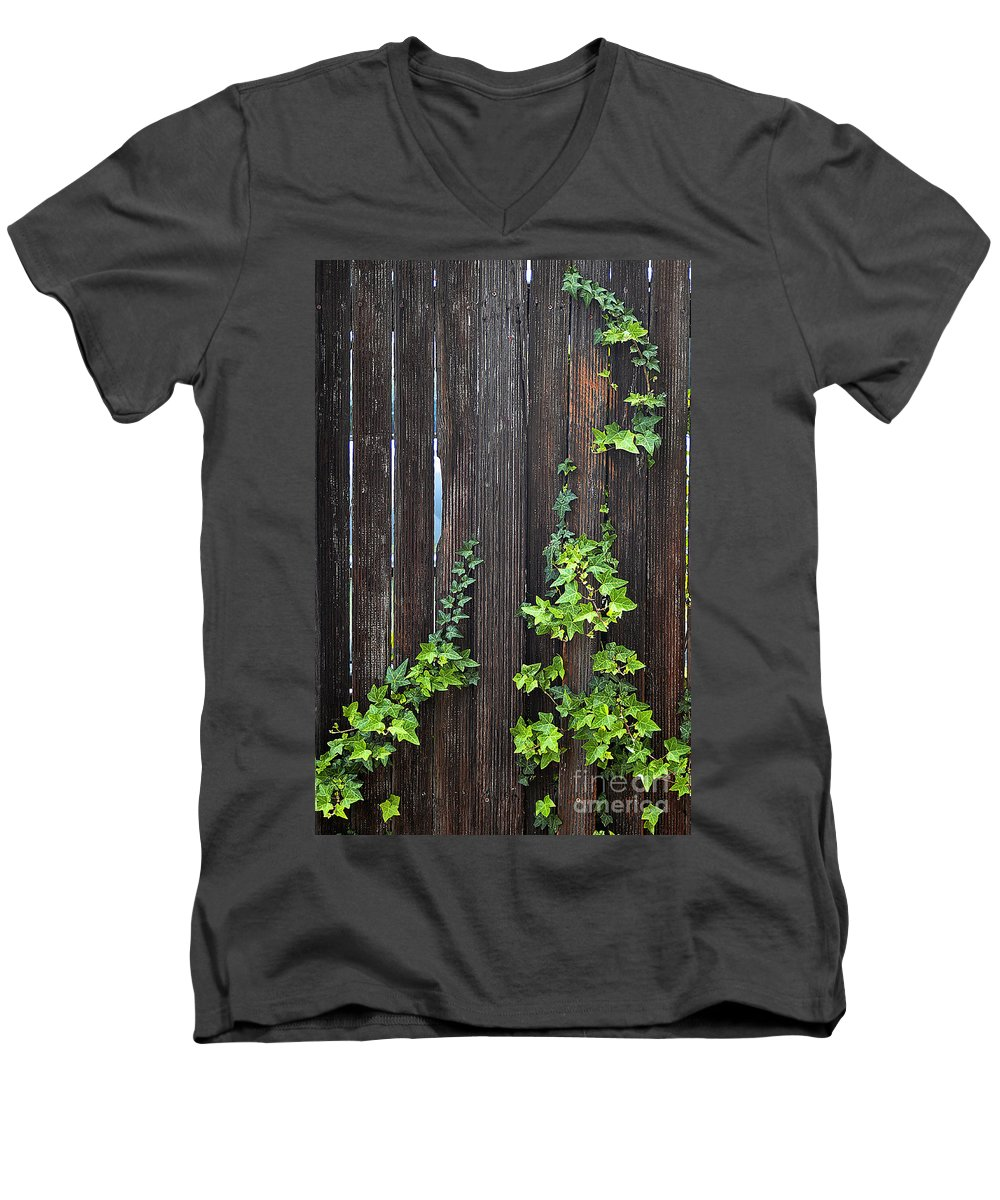 Clay Men's V-Neck T-Shirt featuring the photograph Ivy On Fence by Clayton Bruster