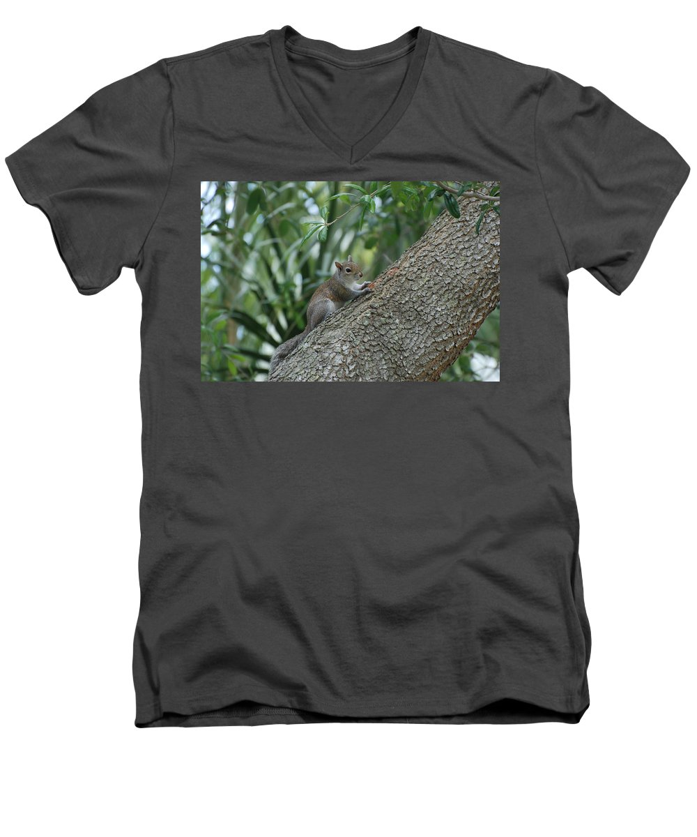 Squirrels Men's V-Neck T-Shirt featuring the photograph Just Chilling Out by Rob Hans