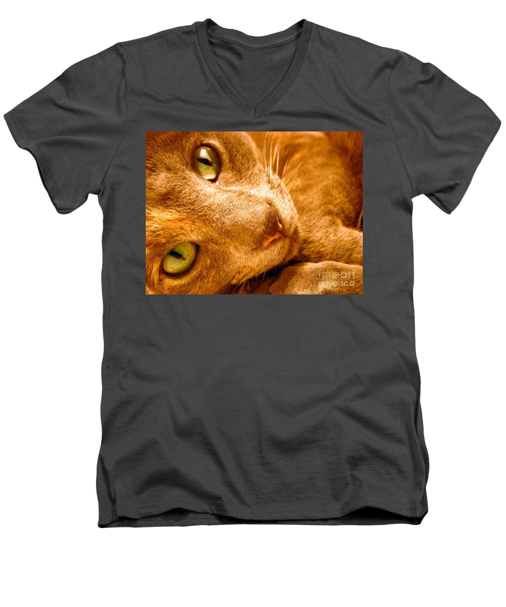 Cats Men's V-Neck T-Shirt featuring the photograph Kitty by Amanda Barcon