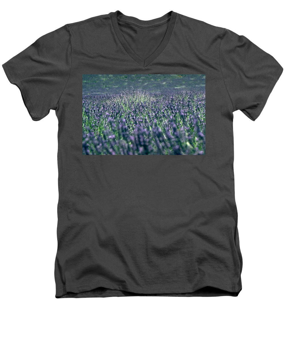 Lavender Men's V-Neck T-Shirt featuring the photograph Lavender by Flavia Westerwelle