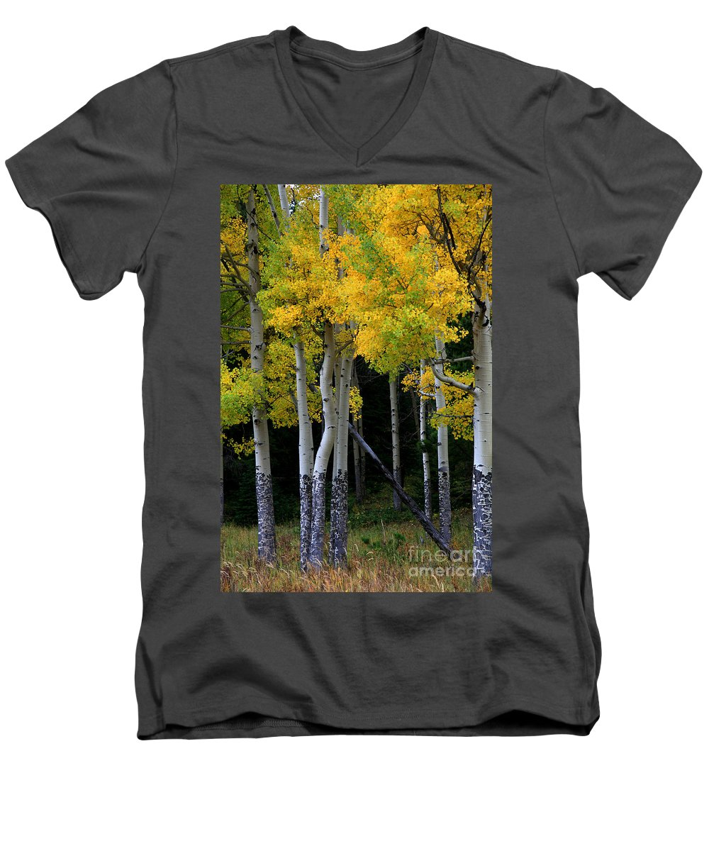 Aspens Men's V-Neck T-Shirt featuring the photograph Leaning Aspen by Timothy Johnson