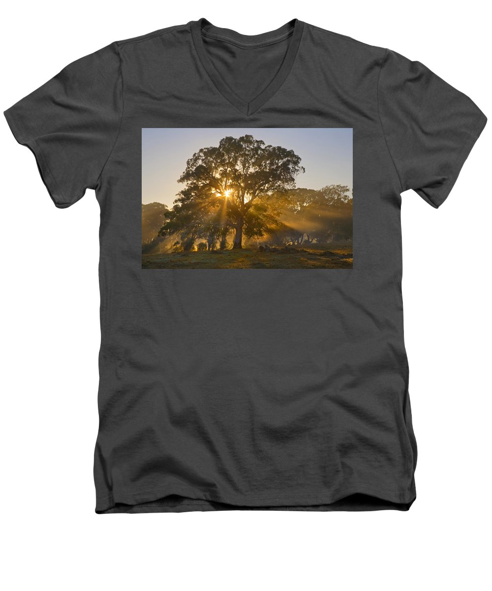 Tree Men's V-Neck T-Shirt featuring the photograph Let There Be Light by Mike Dawson