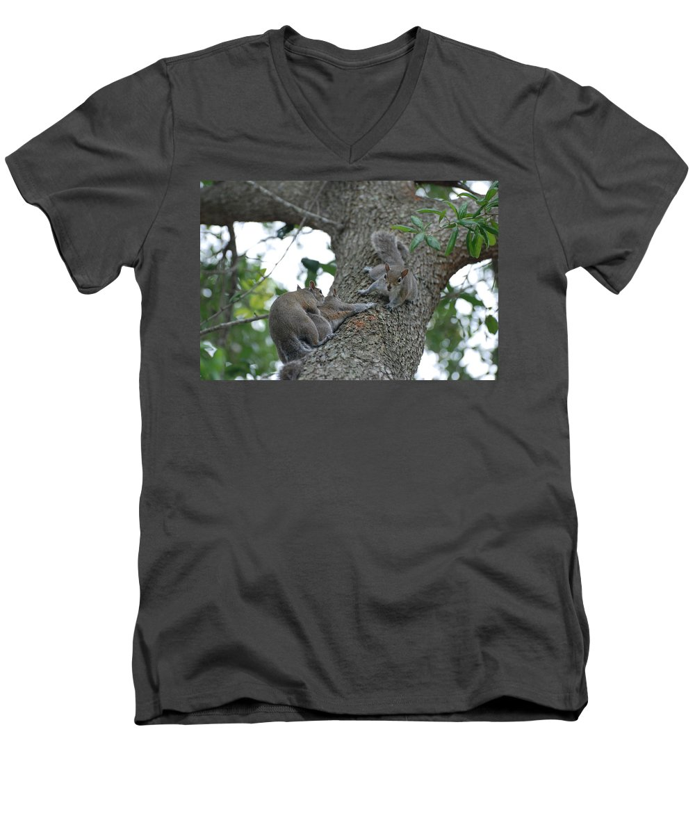 Squirrel Men's V-Neck T-Shirt featuring the photograph Luck Be A Lady by Rob Hans