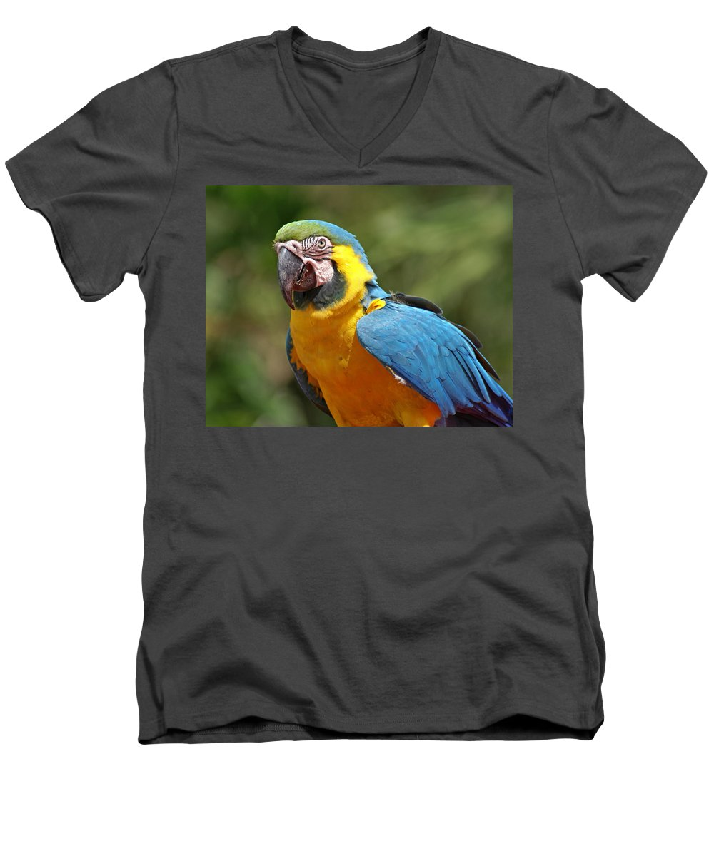 Parrot Men's V-Neck T-Shirt featuring the photograph Macaw by Heather Coen