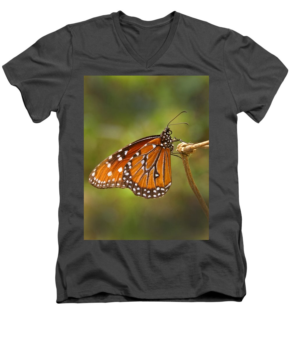 Monarch Men's V-Neck T-Shirt featuring the photograph Monarch Butterfly by Heather Coen