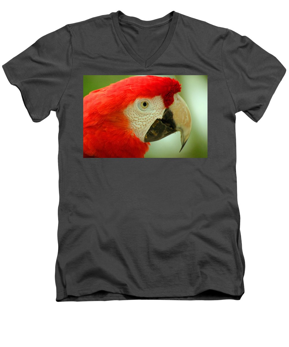 Parrot Men's V-Neck T-Shirt featuring the photograph Scarlett Macaw South America by Ralph A Ledergerber-Photography