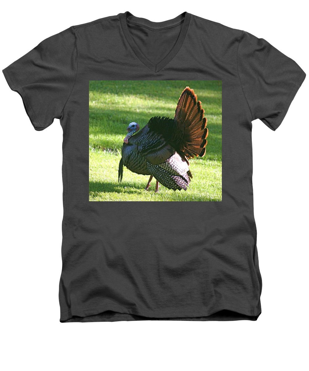 Turkey Men's V-Neck T-Shirt featuring the photograph The Big Tom by Robert Pearson