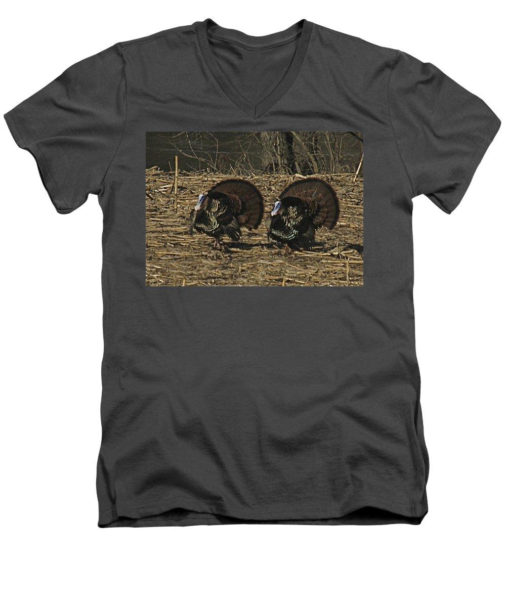Turkey Men's V-Neck T-Shirt featuring the photograph Turkeystrutin by Robert Pearson