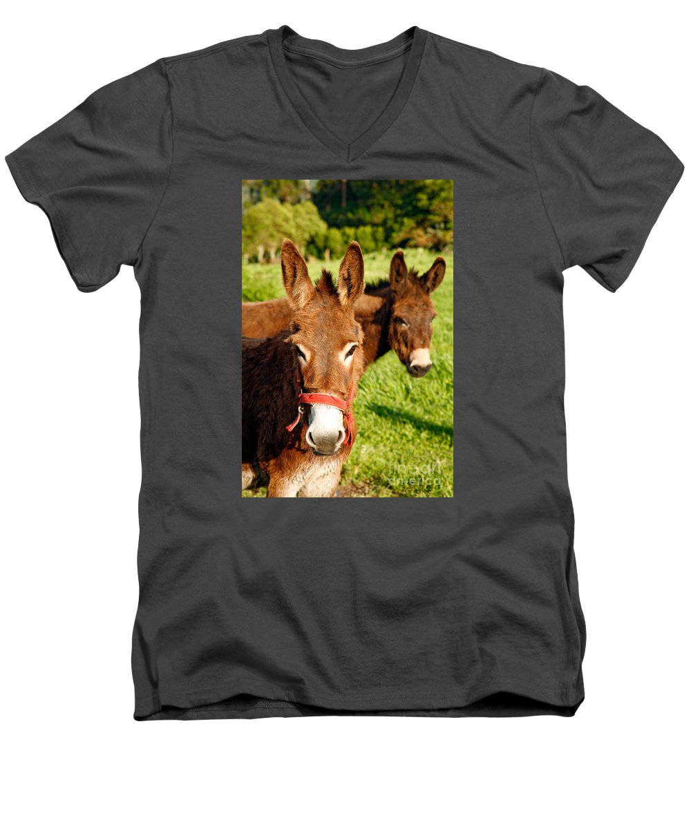 Animals Men's V-Neck T-Shirt featuring the photograph Two Donkeys by Gaspar Avila