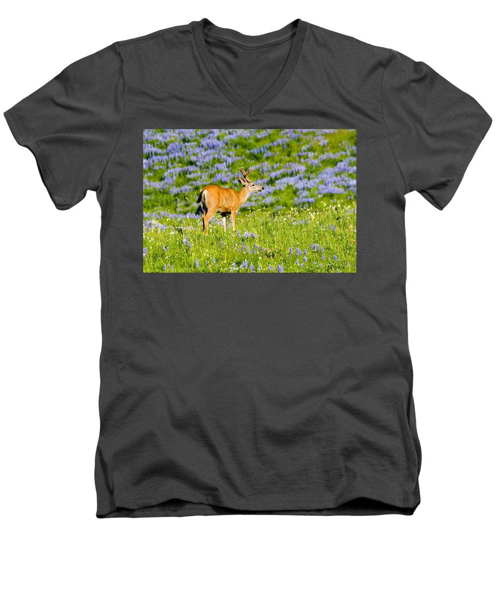 Deer Men's V-Neck T-Shirt featuring the photograph Velvet On Lupine by Mike Dawson