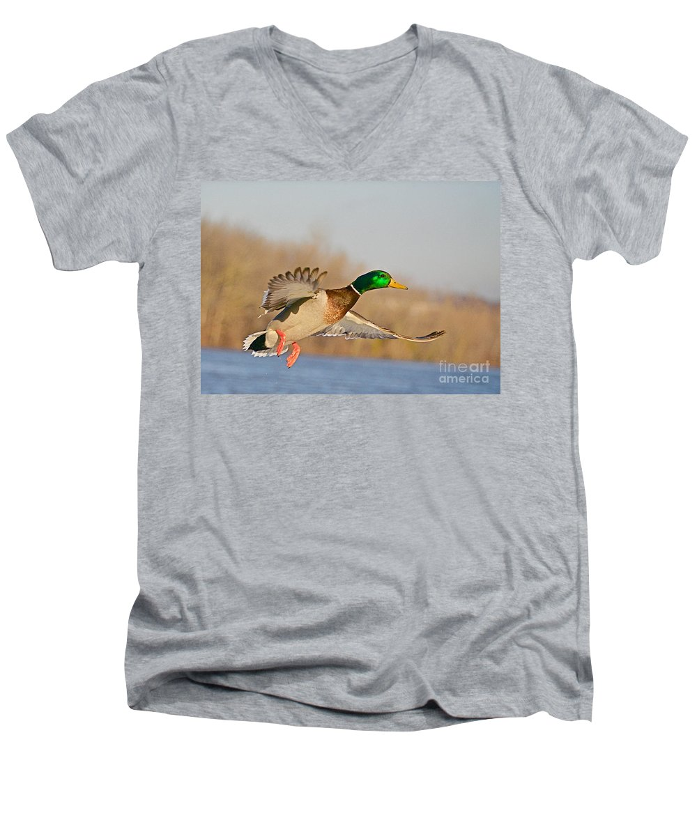 Mallard Men's V-Neck T-Shirt featuring the photograph Fly By by Robert Pearson