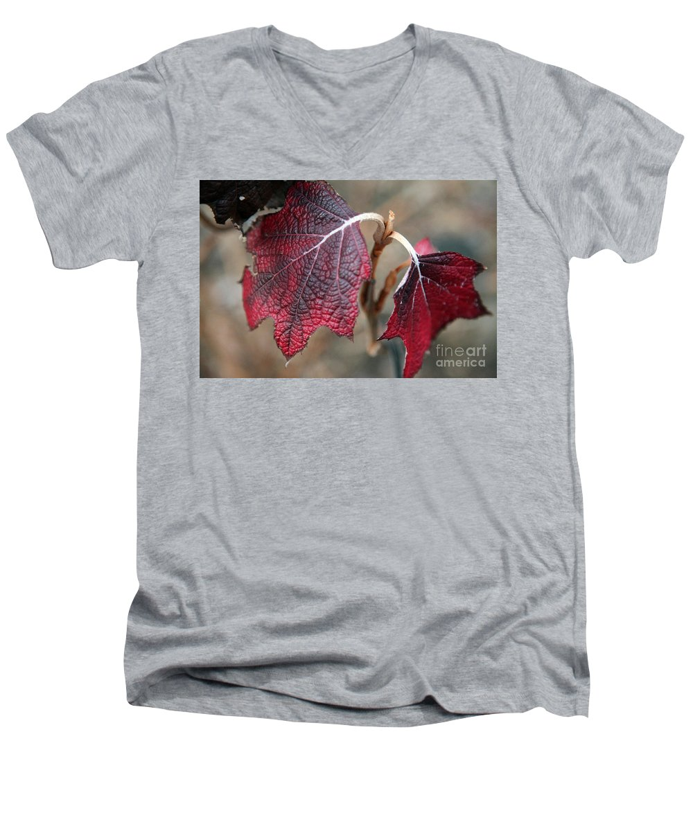 Fall Men's V-Neck T-Shirt featuring the photograph Leaves by Amanda Barcon