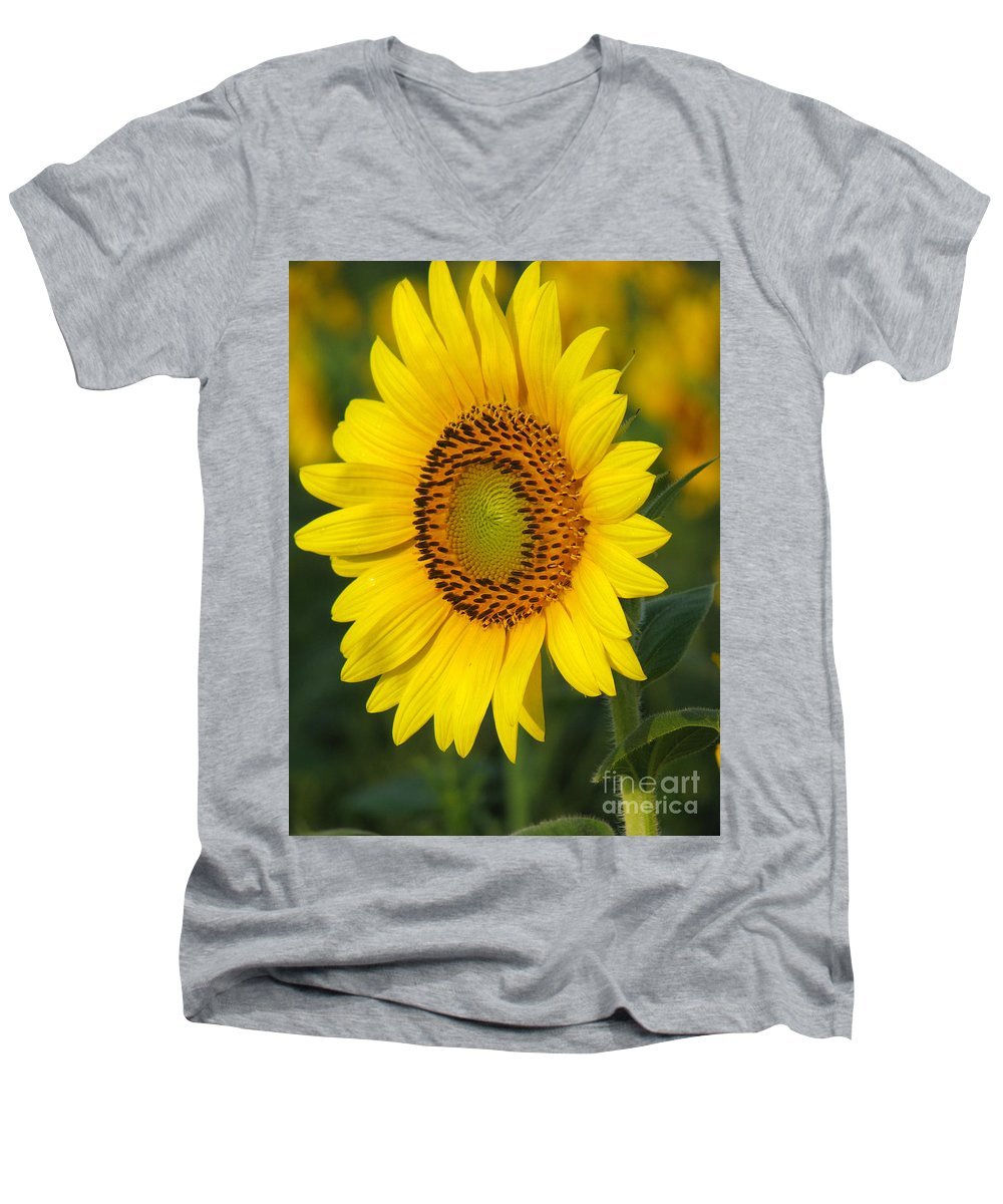 Sunflowers Men's V-Neck T-Shirt featuring the photograph Sunflower by Amanda Barcon