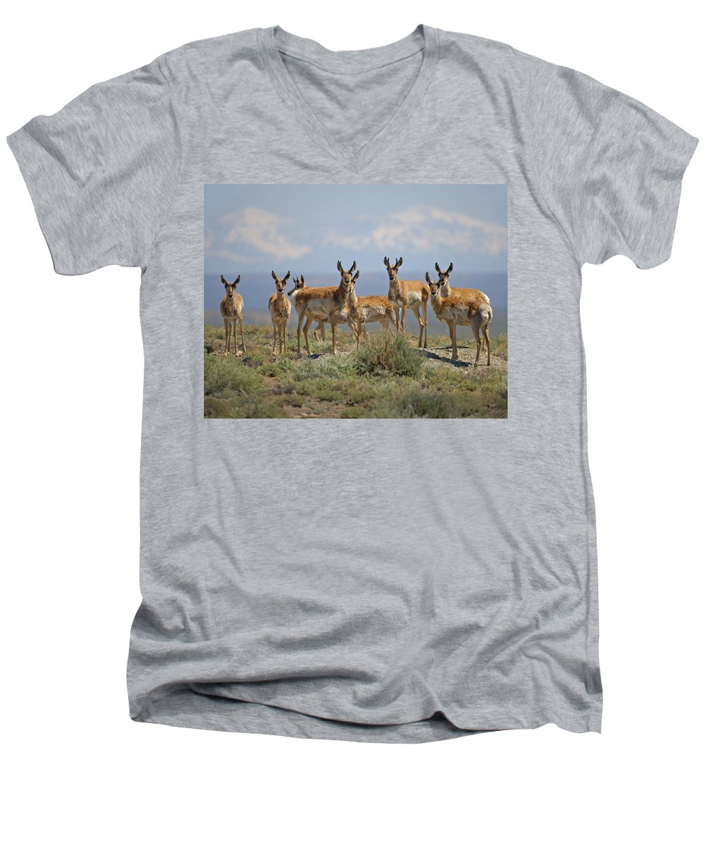 Antelope Men's V-Neck T-Shirt featuring the photograph Antelope by Heather Coen