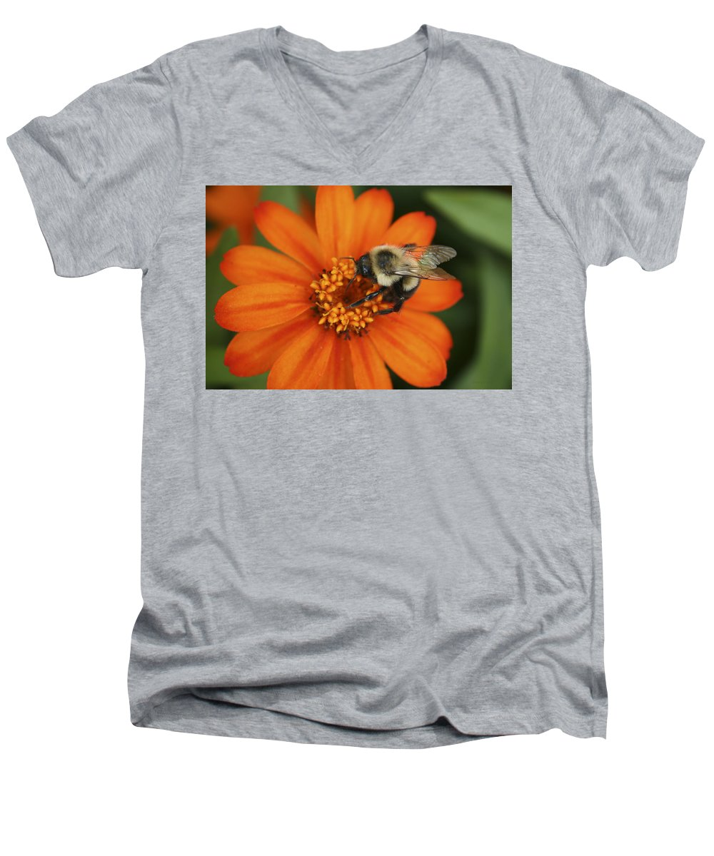 Bee Men's V-Neck T-Shirt featuring the photograph Bee On Aster by Margie Wildblood