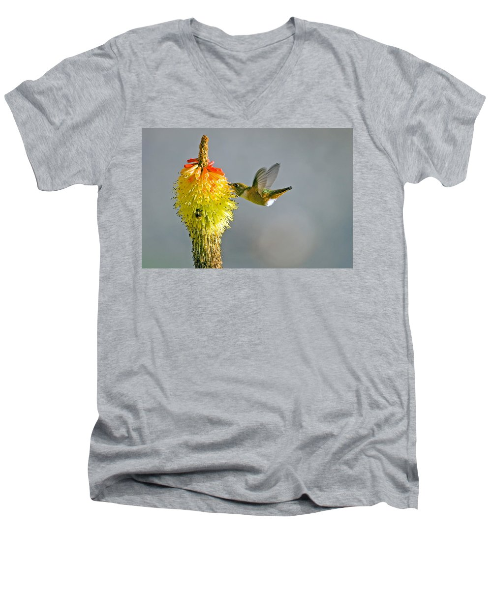 Hummingbird Men's V-Neck T-Shirt featuring the photograph Birds And Bees by Mike Dawson