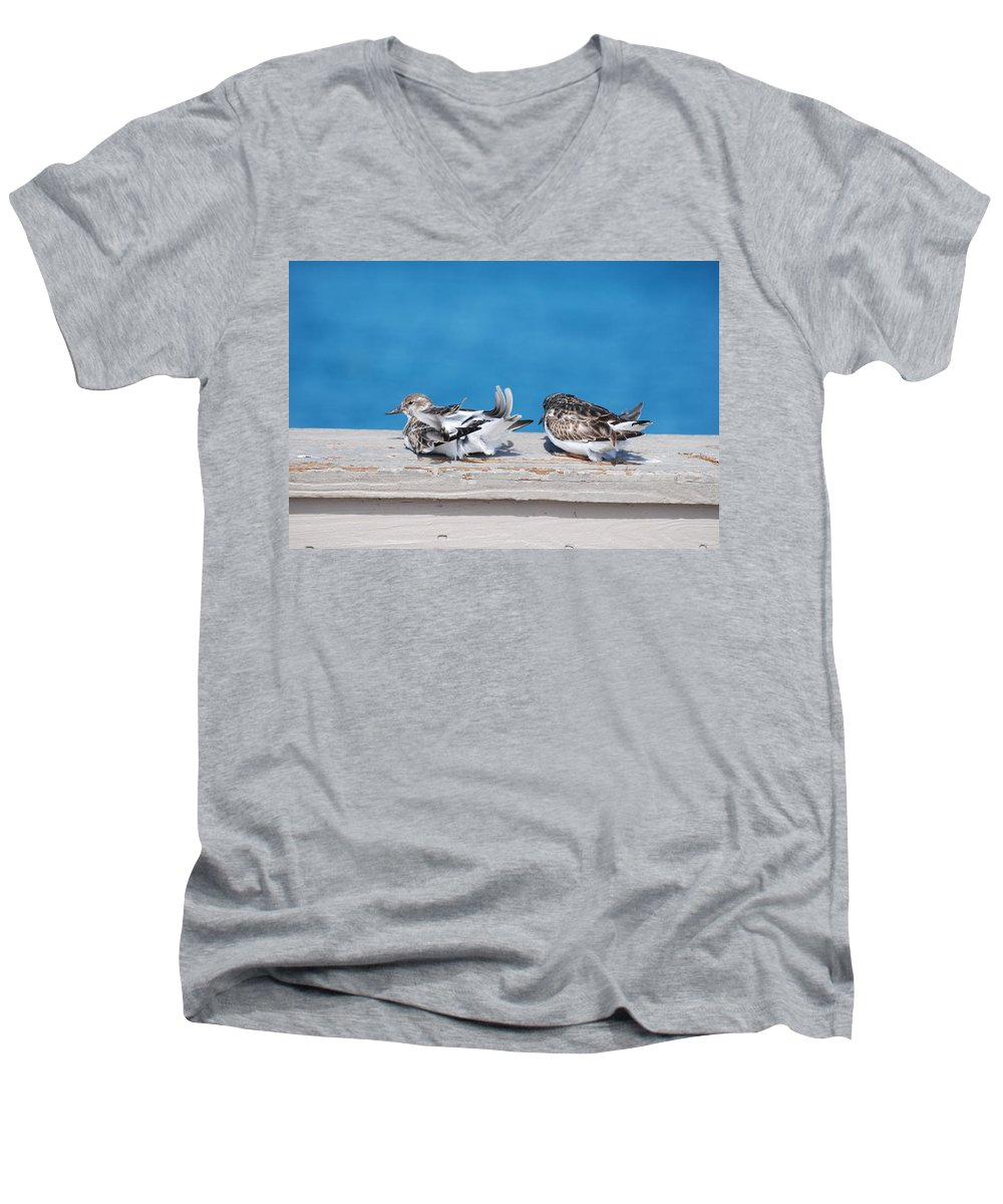 Bird Men's V-Neck T-Shirt featuring the photograph Cold Birds by Rob Hans
